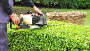 Hedge Trimming & Maintenance